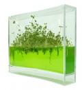 Plantarium Super: futuristische Zimmerpflanzen